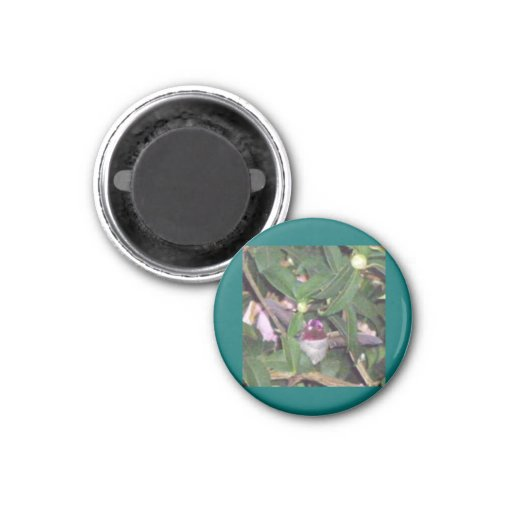 Ruby-throated Hummingbird 1 Inch Round Magnet
