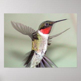 Ruby-Throated Hummingbird 2003-0082a Print