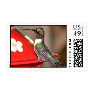 Ruby-Throated Hummingbird 2004_0146a Stamp