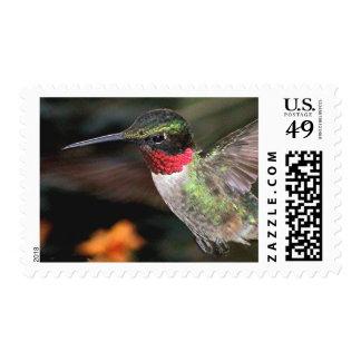 Ruby-Throated Hummingbird 2004_0247a Postage