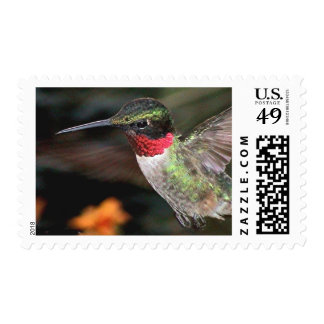 Ruby-Throated Hummingbird 2004_0247a Stamp