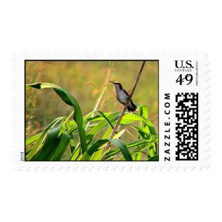 Ruby-Throated Hummingbird 2005_0074a Postage