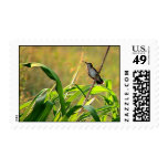 Ruby-Throated Hummingbird 2005_0074a Postage Stamp