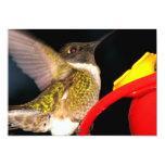 "Ruby-Throated Hummingbird 5"" X 7"" Invitation Card"