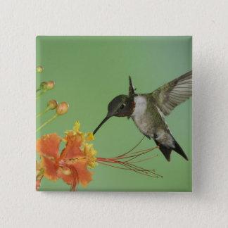 Ruby-throated Hummingbird, Archilochus 2 Pinback Button