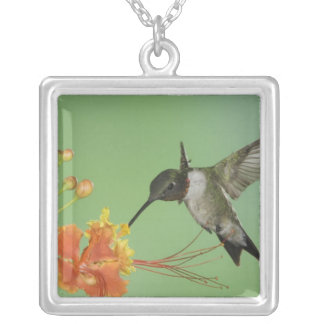 Ruby-throated Hummingbird, Archilochus 2 Silver Plated Necklace