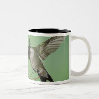 Ruby-throated Hummingbird, Archilochus 2 Two-Tone Coffee Mug