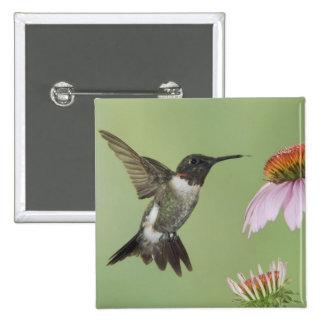 Ruby-throated Hummingbird, Archilochus 3 Button