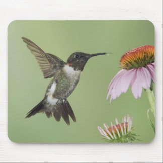 Ruby-throated Hummingbird, Archilochus 3 Mouse Pad