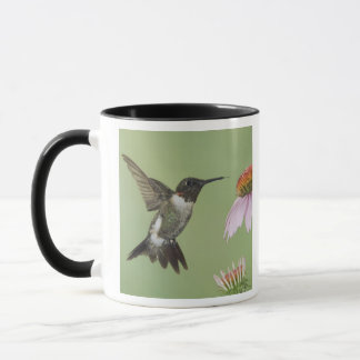 Ruby-throated Hummingbird, Archilochus 3 Mug
