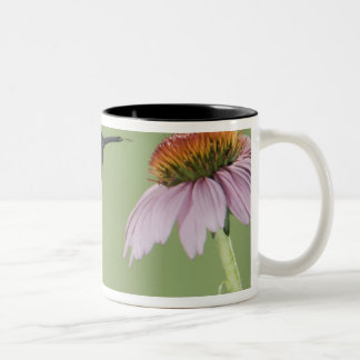Ruby-throated Hummingbird, Archilochus 3 Two-Tone Coffee Mug