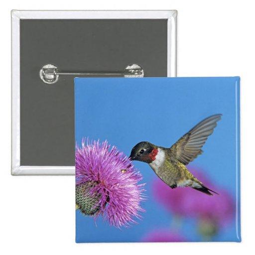 Ruby-throated Hummingbird, Archilochus 4 2 Inch Square Button
