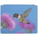 Ruby-throated Hummingbird, Archilochus 4 iPad Cover