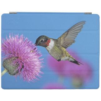 Ruby-throated Hummingbird Archilochus 4 iPad Cover