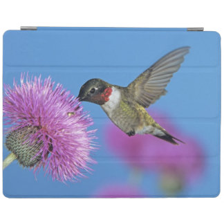 Ruby-throated Hummingbird, Archilochus 4 iPad Smart Cover