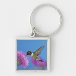 Ruby-throated Hummingbird, Archilochus 4 Keychain