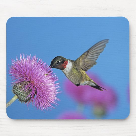 Ruby-throated Hummingbird, Archilochus 4 Mouse Pad