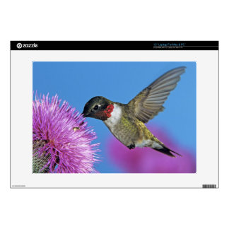 "Ruby-throated Hummingbird, Archilochus 4 Skins For 15"" Laptops"
