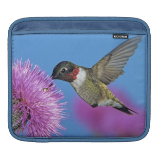 Ruby-throated Hummingbird, Archilochus 4 Sleeve For iPads