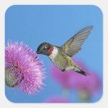 Ruby-throated Hummingbird, Archilochus 4 Square Sticker