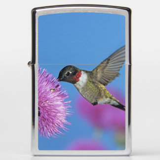 Ruby-throated Hummingbird, Archilochus 4 Zippo Lighter