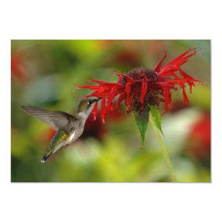 "Ruby-Throated Hummingbird Archilochus Colubris 5"" X 7"" Invitation Card"