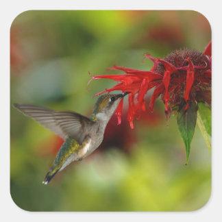 Ruby-Throated Hummingbird Archilochus Colubris Square Sticker