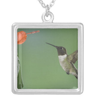 Ruby-throated Hummingbird, Archilochus Silver Plated Necklace