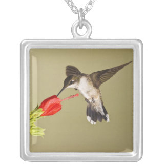 Ruby-throated Hummingbird Archilochus Silver Plated Necklace