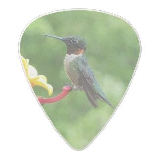 Ruby-Throated Hummingbird Bird Photography Acetal Guitar Pick