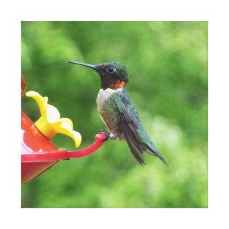 Ruby-Throated Hummingbird Bird Photography Canvas Print