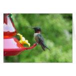 Ruby-Throated Hummingbird Bird Photography Card
