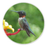 Ruby-Throated Hummingbird Bird Photography Ceramic Knob