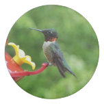Ruby-Throated Hummingbird Bird Photography Eraser