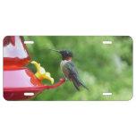 Ruby-Throated Hummingbird Bird Photography License Plate