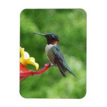 Ruby-Throated Hummingbird Bird Photography Magnet