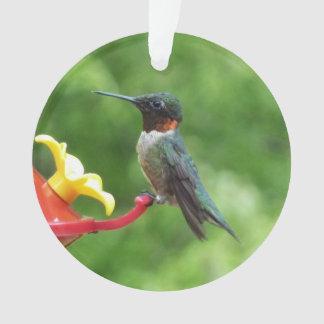 Ruby-Throated Hummingbird Bird Photography Ornament