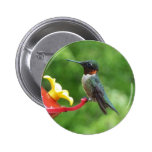 Ruby-Throated Hummingbird Bird Photography Pinback Button