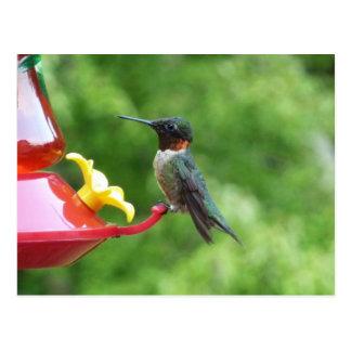 Ruby-Throated Hummingbird Bird Photography Postcard