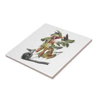 Ruby-throated Hummingbird by Audubon Tile