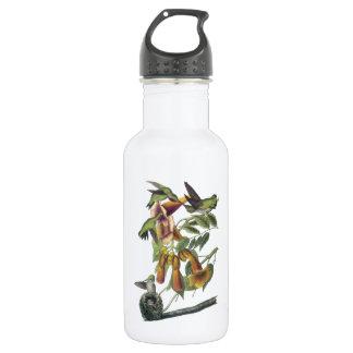 Ruby-throated Hummingbird by Audubon Water Bottle
