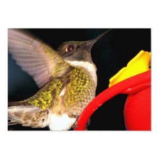 Ruby-Throated Hummingbird Card