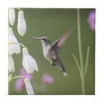 """Ruby-throated Hummingbird Ceramic Tile<br><div class=""""desc"""">Local Exploration is the name of my blog online (www.local-exploration.com),  which combines my love for hiking and wildlife through photography.  The photographs used on these products were taken by me from my adventures around the Mid-Hudson Valley in New York and my occasional excursions out of the state.</div>"""