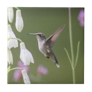 Ruby-throated Hummingbird Ceramic Tile