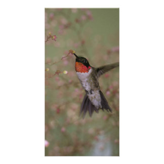 Ruby Throated Hummingbird drinking from a flower Card