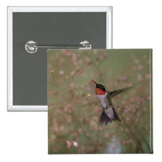 Ruby Throated Hummingbird drinking from flower Pinback Button