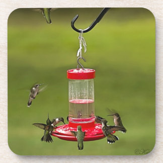 Ruby Throated Hummingbird Feeding Frenzy Coaster