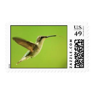 Ruby Throated Hummingbird Female Postage
