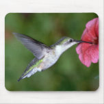 Ruby-throated Hummingbird (female) with petunia Mouse Pad