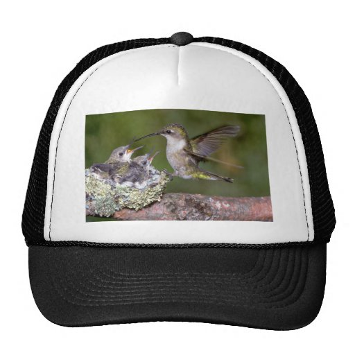 Ruby-throated Hummingbird (female) with young Trucker Hat